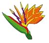 Send flowers through Albuquerque Florist